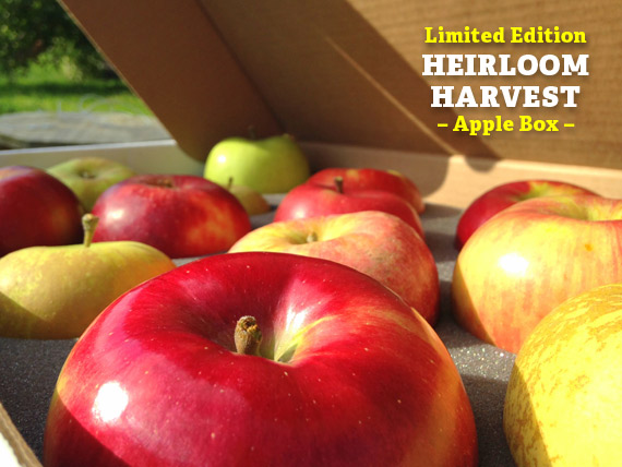 Order Apple gift Boxes